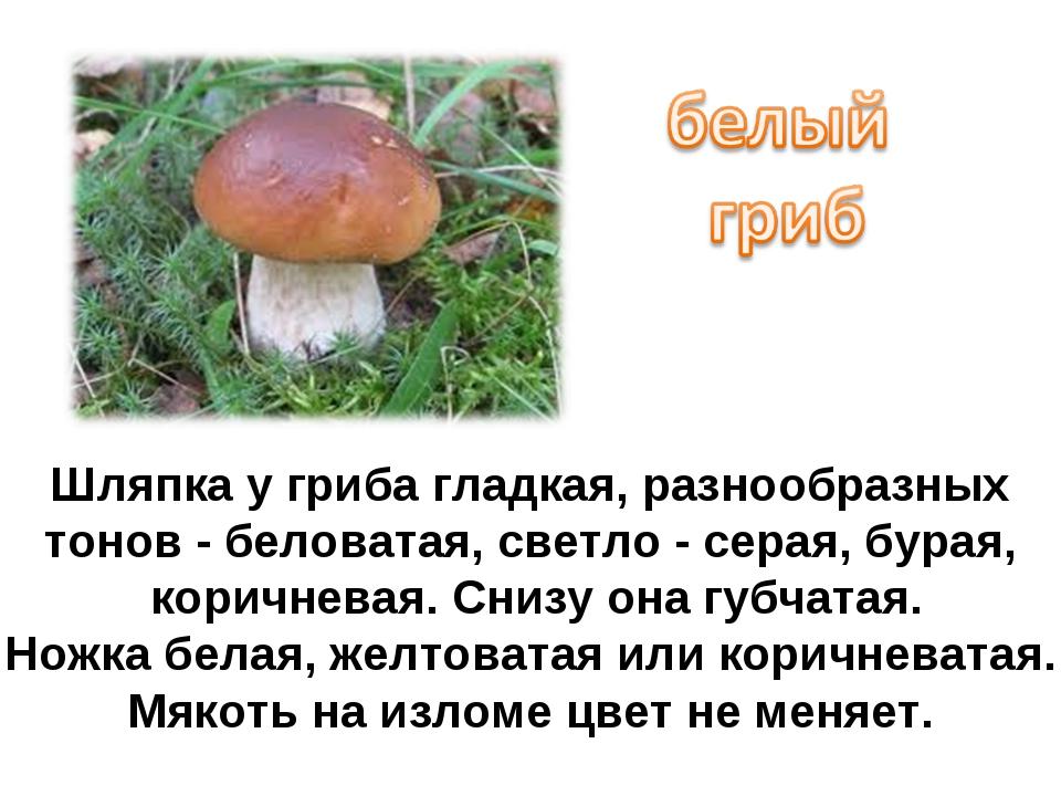 Шляпка у гриба гладкая, разнообразных тонов - беловатая, светло - серая, бура...