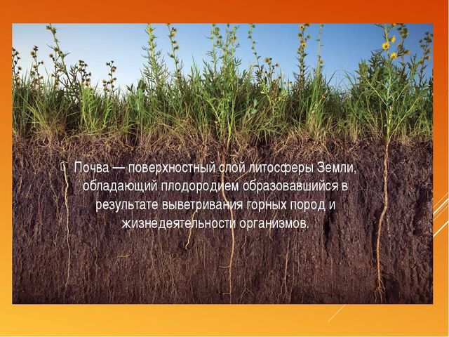 Почва— поверхностный слойлитосферыЗемли, обладающийплодородием образовавш...
