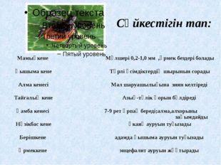 Сәйкестігін тап: Мамықкене Мөлшері 0,2-1,0 мм ,өрмек бездері болады Қышыма ке