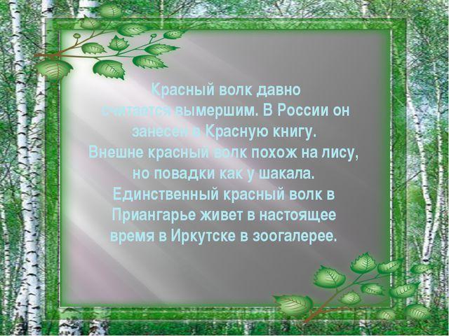 Красный волк давно считается вымершим. В России он занесен в Красную книгу. В...