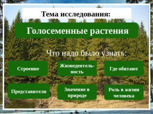 Тема исследования: Голосеменные растения Что надо было узнать: Строение Пред