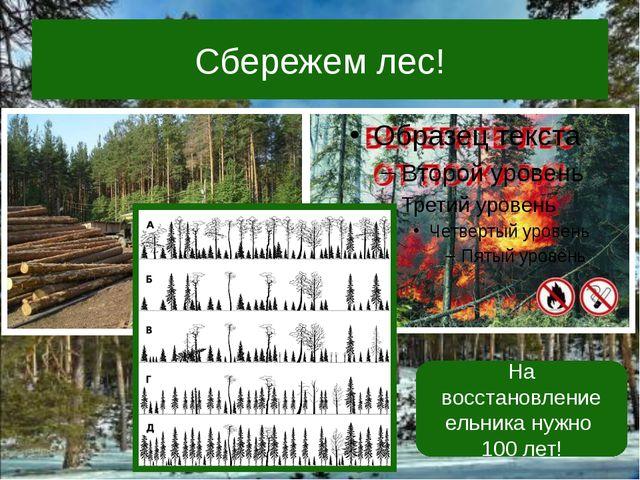 Сбережем лес! На восстановление ельника нужно 100 лет!