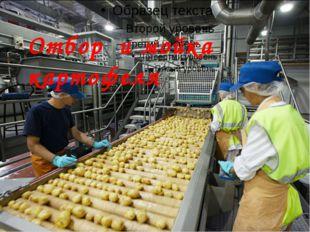 Отбор и мойка картофеля