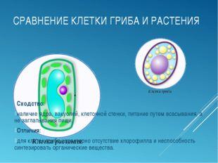 СРАВНЕНИЕ КЛЕТКИ ГРИБА И РАСТЕНИЯ Сходство: наличие ядра, вакуолей, клеточной