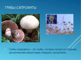 ГРИБЫ-САПРОФИТЫ Грибы-сапрофиты – это грибы, которые питаются готовыми органи