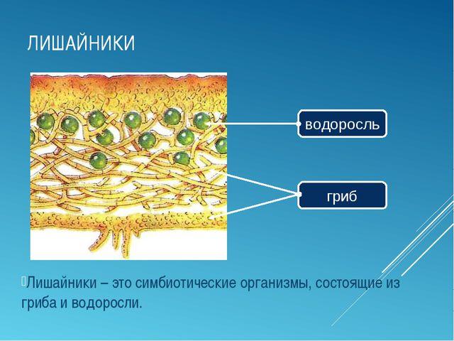 ЛИШАЙНИКИ Лишайники – это симбиотические организмы, состоящие из гриба и водо...