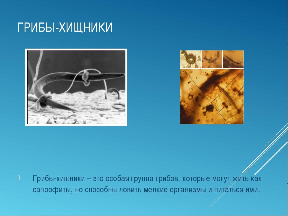 ГРИБЫ-ХИЩНИКИ Грибы-хищники – это особая группа грибов, которые могут жить ка...