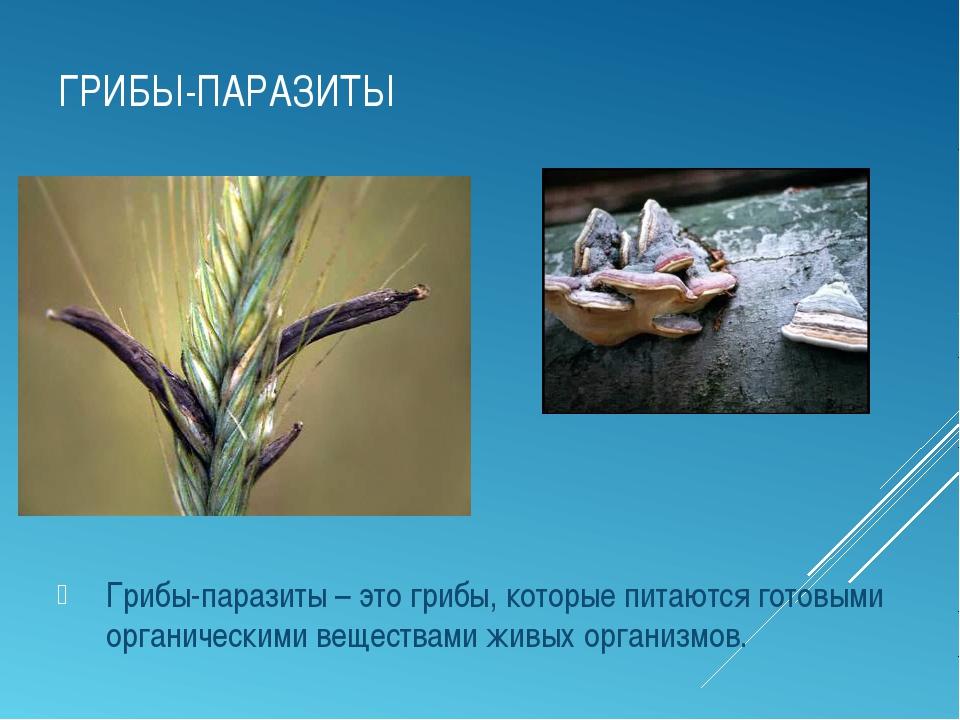 ГРИБЫ-ПАРАЗИТЫ Грибы-паразиты – это грибы, которые питаются готовыми органиче...