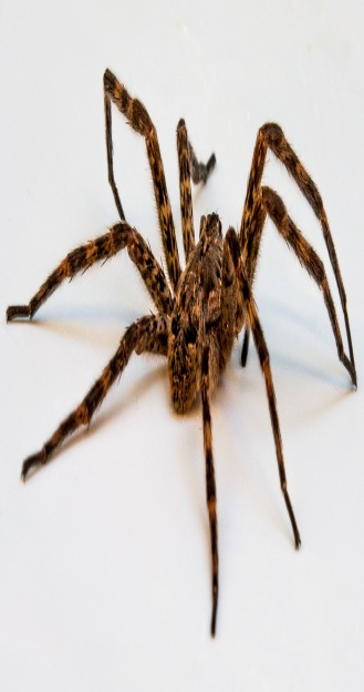 http://www.pest-control-info.com/wp-content/uploads/2014/03/spiders.jpg