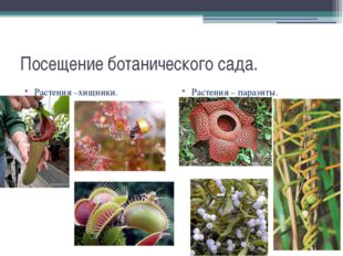 Посещение ботанического сада. Растения –хищники. Растения – паразиты.