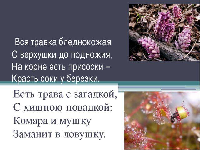 Вся травка бледнокожая С верхушки до подножия, На корне есть присоски – Крас...