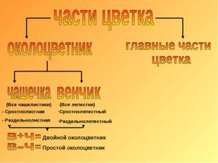 Сростнолепестный Раздельнолепестный - Сростнолистная - Раздельнолистная (Все