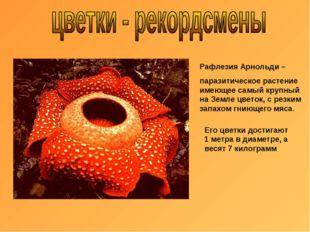 Рафлезия Арнольди – паразитическое растение имеющее самый крупный на Земле цв