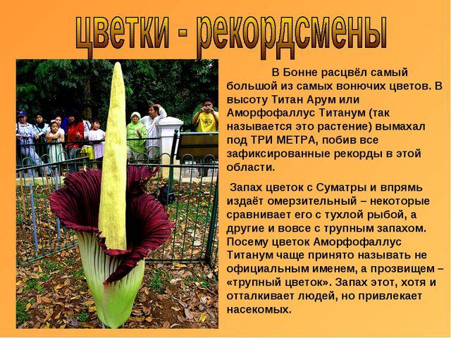 В Бонне расцвёл самый большой из самых вонючих цветов. В высоту Титан Арум и...