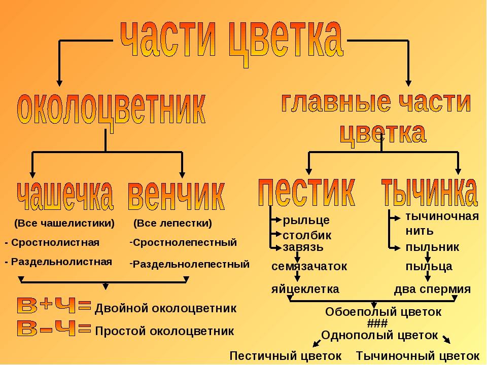 Сростнолепестный Раздельнолепестный - Сростнолистная - Раздельнолистная (Все...