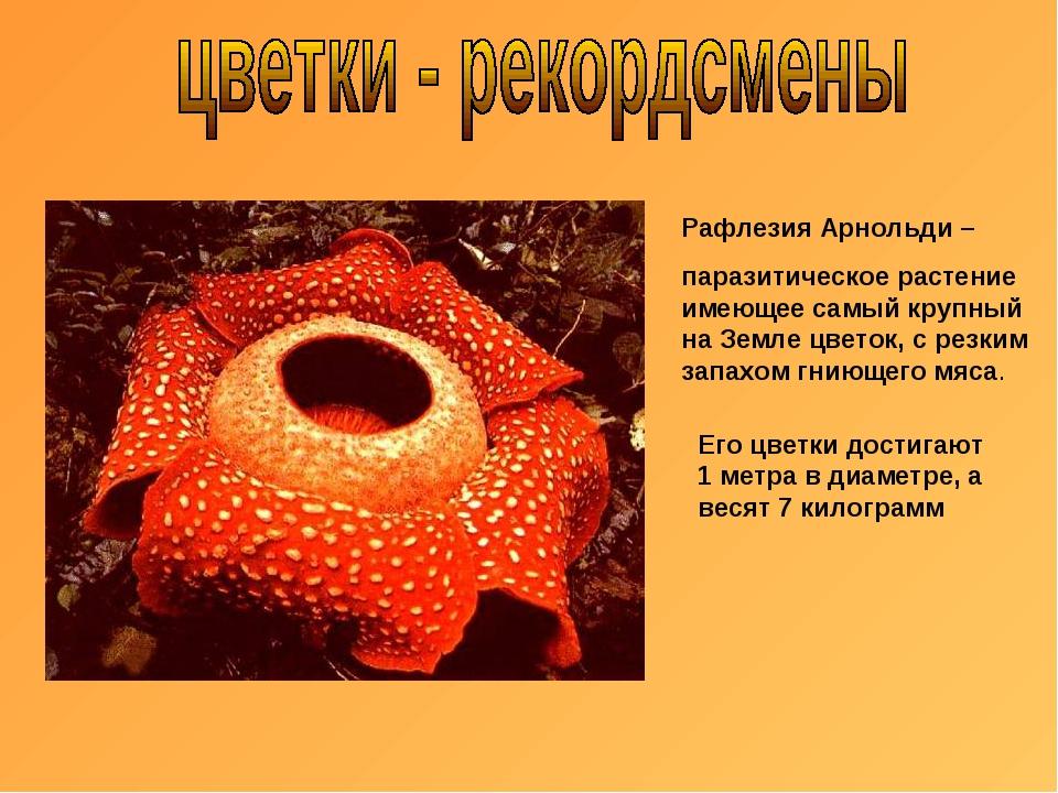 Рафлезия Арнольди – паразитическое растение имеющее самый крупный на Земле цв...