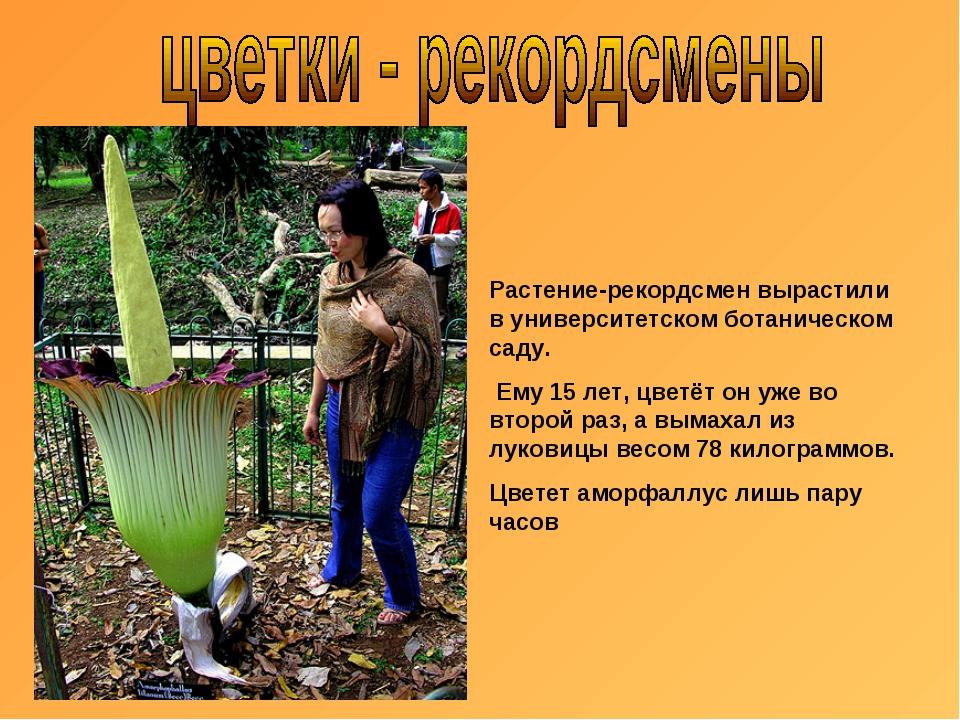 Растение-рекордсмен вырастили в университетском ботаническом саду. Ему 15 лет...