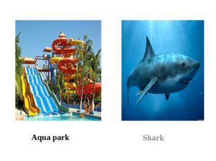 Aqua park Shark
