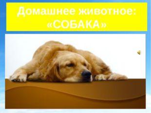 Домашнее животное: «СОБАКА»