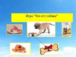 """Игра """"Что ест собака"""""""