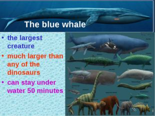 The blue whale the largest creature much larger than any of the dinosaurs can