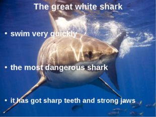 The great white shark swim very quickly the most dangerous shark it has got s