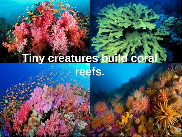 Tiny creatures build coral reefs.