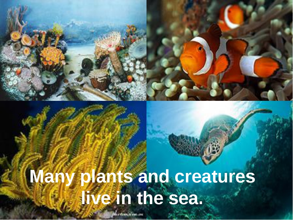 Many plants and creatures live in the sea.