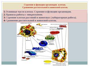 Строение и функции органоидов клетки. Сравнение растительной и животной клето