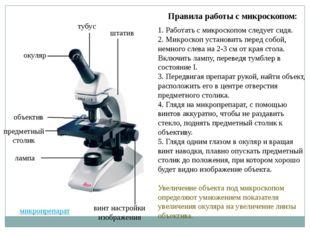 Правила работы с микроскопом: 1. Работать с микроскопом следует сидя. 2. Микр