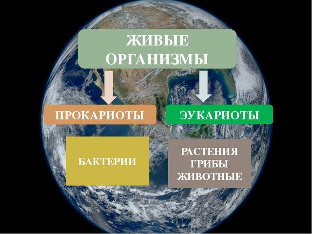 ЖИВЫЕ ОРГАНИЗМЫ БАКТЕРИИ ПРОКАРИОТЫ ЭУКАРИОТЫ РАСТЕНИЯ ГРИБЫ ЖИВОТНЫЕ