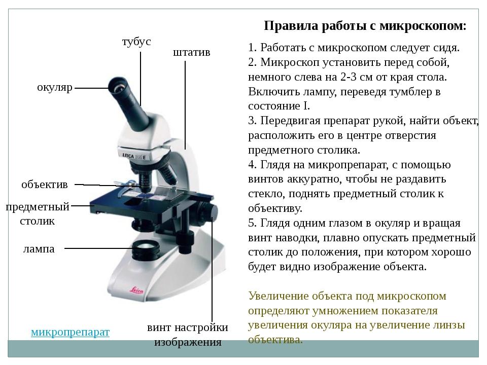 Правила работы с микроскопом: 1. Работать с микроскопом следует сидя. 2. Микр...