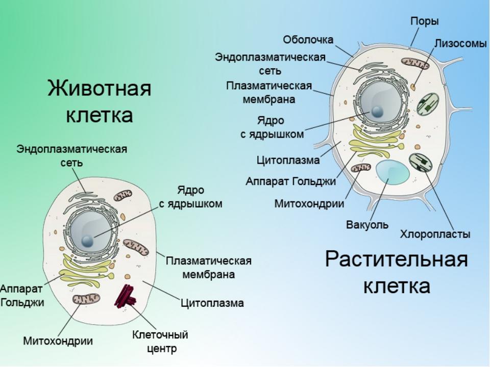 лечение от паразитов полынью и гвоздикой