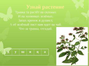 Узнай растение Травка та растёт на склонах И на холмиках зелёных. Запах крепо