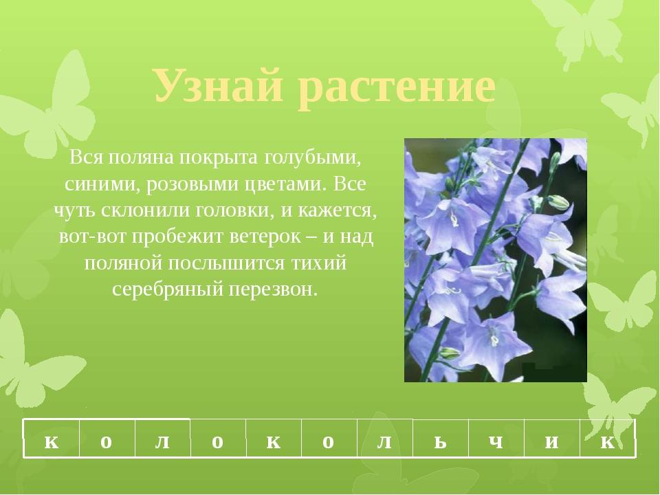 Узнай растение Вся поляна покрыта голубыми, синими, розовыми цветами. Все чут...