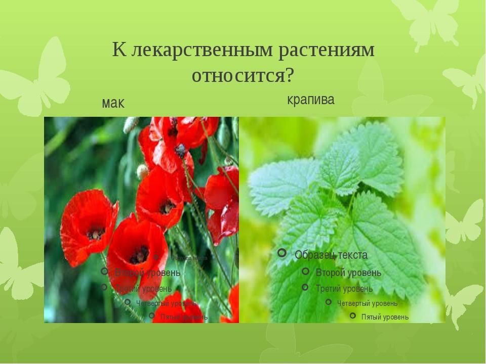 К лекарственным растениям относится? мак крапива