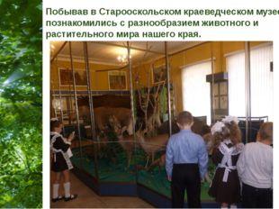 Побывав в Старооскольском краеведческом музее, мы познакомились с разнообрази