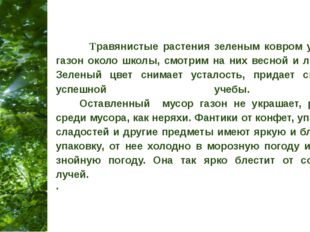 Травянистые растения зеленым ковром укрываем газон около школы, смотрим на н