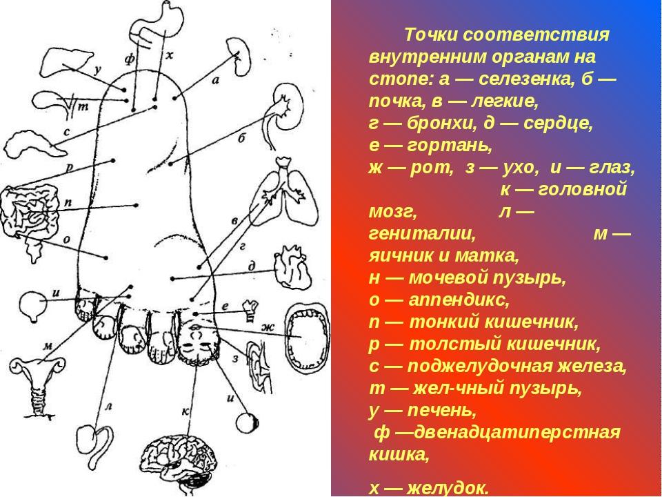 Точки соответствия внутренним органам на стопе: а — селезенка, б — почка, в...