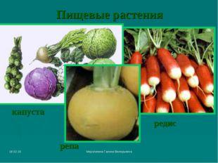 * Мерзликина Галина Валерьевна Пищевые растения редис капуста репа Мерзликина