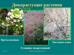 * Мерзликина Галина Валерьевна Дикорастущие растения Ярутка полевая Гулявник
