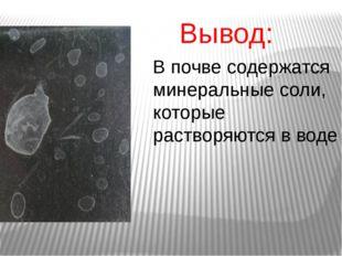 Вывод: В почве содержатся минеральные соли, которые растворяются в воде