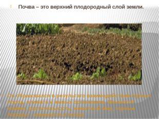 Почва – это верхний плодородный слой земли. Он образовался в результате взаим