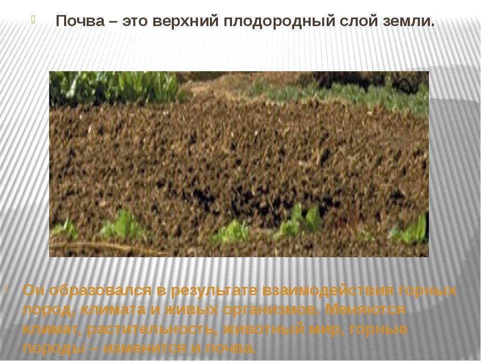 Почва – это верхний плодородный слой земли. Он образовался в результате взаим...