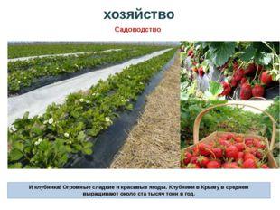 И клубника! Огромные сладкие и красивые ягоды. Клубники в Крыму в среднем выр
