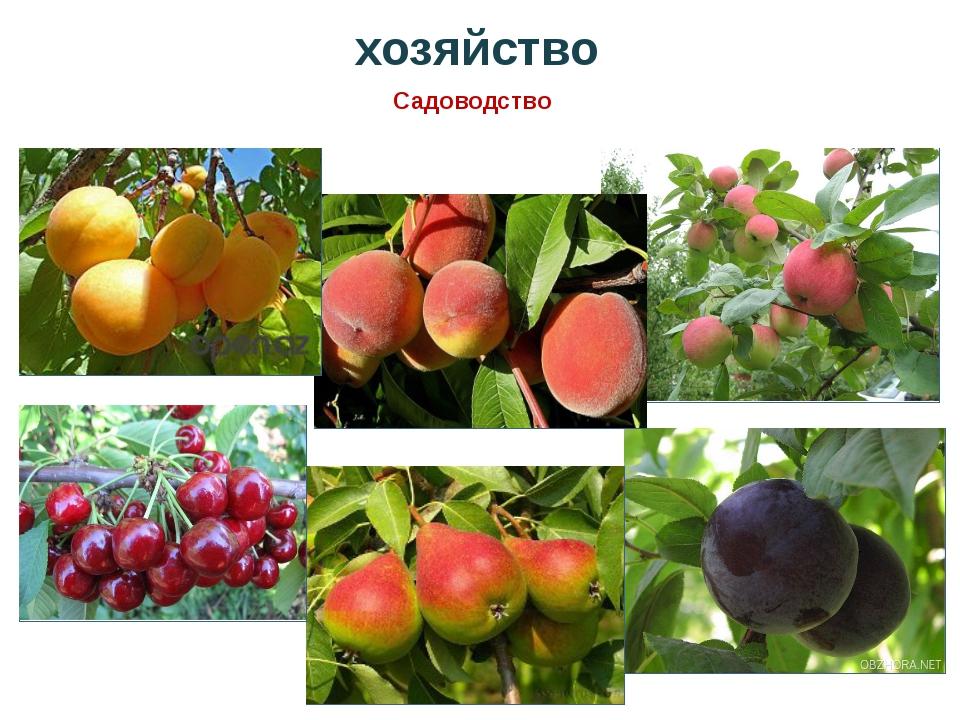 хозяйство Садоводство