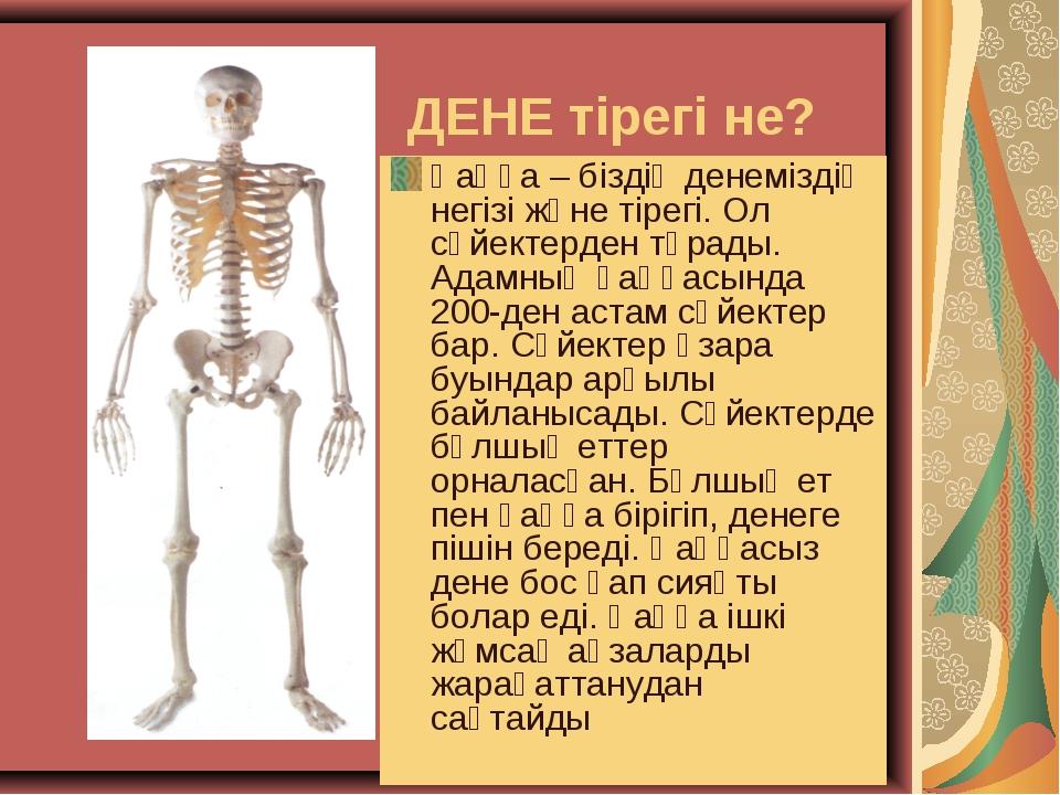 ДЕНЕ тірегі не? Қаңқа – біздің денеміздің негізі және тірегі. Ол сүйектерден...