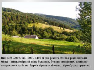 Від 500 -700 м до 1000 - 1400 м (на різних схилах різні висоти меж) - низьког