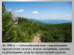 До 1800 м — субальпійський пояс з переважанням гірської сосни (жереп), вільхи