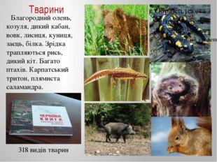 Тварини Благородний олень, козуля, дикий кабан, вовк, лисиця, куниця, заєць,